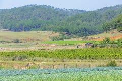 Ackerlandlandschaft im Sonnenschein Stockfotografie