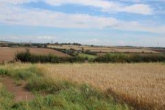 Ackerlandlandschaft mit Ernten Stockbilder