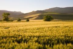 Ackerlandlandschaft, Sizilien Stockbild