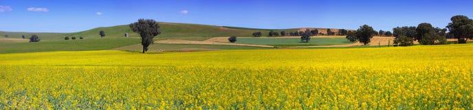 Ackerlandpanorama des Landes NSW Lizenzfreies Stockfoto