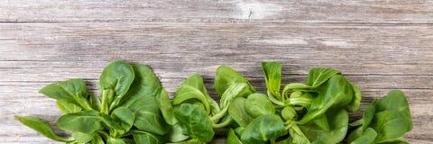 Ackerlandsalat als Linie auf Holz Stockbild