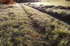 Ackerlandstraße durch bereiftes Gras im Morgensonnenlicht Lizenzfreies Stockbild