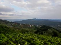 Ackerlandvegetation auf den Hügeln von Nord-Thailand Stockfoto