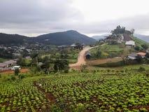 Ackerlandvegetation auf den Hügeln von Nord-Thailand Stockfotos