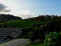 Ackerlandvegetation auf den Hügeln von Nord-Thailand Stockbild