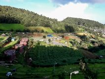 Ackerlandvegetation auf den Hügeln von Nord-Thailand Stockbilder