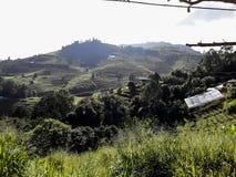 Ackerlandvegetation auf den Hügeln von Nord-Thailand Lizenzfreies Stockbild