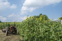Ackerschlepper auf einem Sonnenblumengebiet Lizenzfreie Stockfotografie