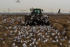 Ackerschlepper, der ein Feld im Winter pflügt Lizenzfreie Stockfotografie
