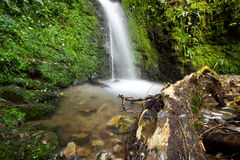 Acland waterfall Royalty Free Stock Images