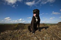 Aclaración 1 del perro Imágenes de archivo libres de regalías