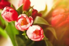 Aclare encima de su día con las flores foto de archivo libre de regalías