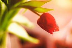 Aclare encima de su día con las flores fotografía de archivo libre de regalías