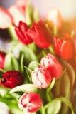 Aclare encima de su d?a con las flores imágenes de archivo libres de regalías