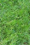 Aclare la hierba imagen de archivo