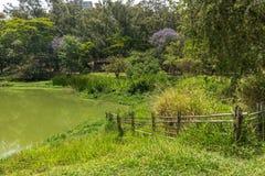 Aclimacao公园自然的看法在圣保罗 免版税图库摄影