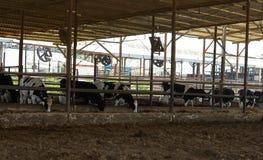 Acobarda la granja, pueblo de los kibutz imagen de archivo libre de regalías