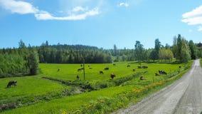 Acobarde el exterior derecho al lado de un camino de la grava en Finlandia fotos de archivo libres de regalías