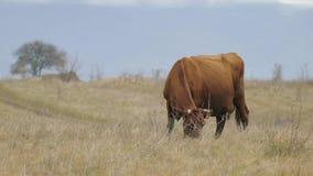 Acobarde el pasto en prados del rancho metrajes