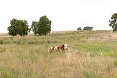 Acobarde la mentira en la hierba en un prado Foto de archivo libre de regalías