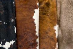 Acobarde o cinza vermelho branco do preto da textura do teste padrão da pele Fotografia de Stock