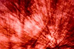 Acometida roja en árboles Fotografía de archivo
