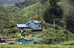 Acomodação na propriedade do chá de Sungai Palas Boh em Cameron Highlands, Malásia do ` dos trabalhadores imagem de stock royalty free