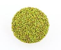 Aconitifolia de Vigna de fèves de mung Photos libres de droits