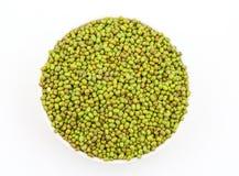 Aconitifolia de Vigna de fèves de mung Image libre de droits