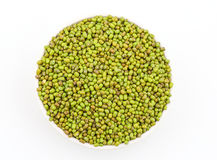 Aconitifolia Vigna фасолей Mung Стоковое Изображение RF