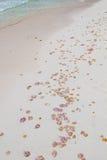 Acontecimiento estacional de las medusas Foto de archivo