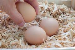 Acopio de los huevos frescos Imagen de archivo libre de regalías