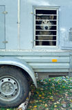 Acoplado para transportar perros Fotos de archivo libres de regalías