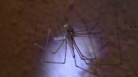 Acoplamiento de las arañas del sótano almacen de video