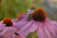 Acoplamiento en la flor Imagenes de archivo