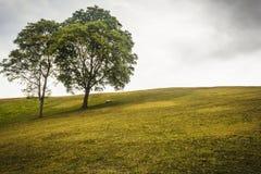 Acople árvores no campo verde e em um monte Foto de Stock