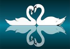 Acople as cisnes brancas na reflexão do lago ilustração royalty free