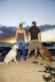 Acople as mãos da terra arrendada e cães de passeio na praia Fotografia de Stock Royalty Free