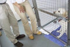 Acople o cão de animal de estimação de visita foto de stock royalty free