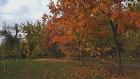Acople o passeio ao longo da aleia do outono no parque da cidade vídeos de arquivo