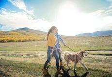 Acople o prado do campo do por do sol do outono do cão do perdigueiro da caminhada que guarda as mãos fotos de stock royalty free