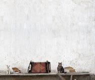Acordeão e dois gatos foto de stock royalty free