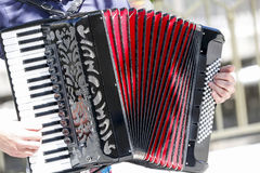 Acordeon Stockbild