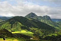 Acores; flores海岛,东海岸全景  库存图片