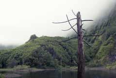 Acores; lagoa das patos on flores island Royalty Free Stock Photography