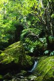 Acores; small jungle valley on flores Royalty Free Stock Image