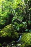 Acores; vale pequeno da selva em flores Imagem de Stock Royalty Free