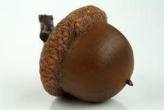 acorn Obrazy Royalty Free