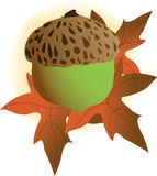 Acorn. A single acorn on an autumn leaf Royalty Free Stock Images