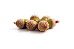 Acorn Royalty Free Stock Photo